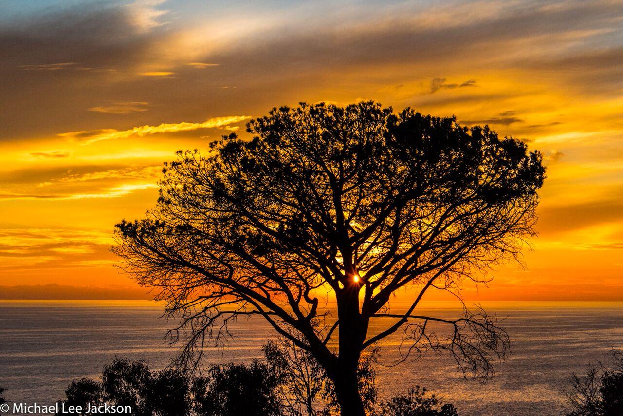 Michael Lee Jackson - 2016 - Tree of the End