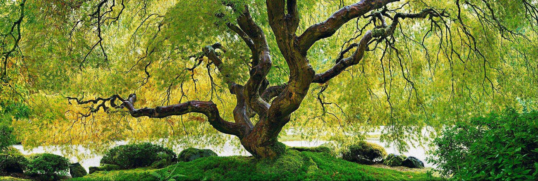 Peter Lik - Tree of Serenity
