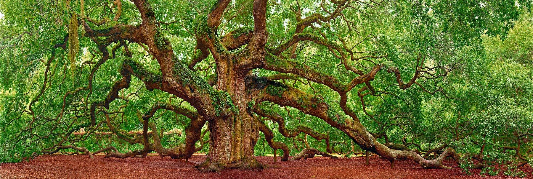 Peter Lik - Tree of Hope